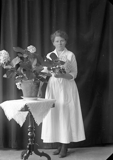 """Enligt fotografens journal nr 3 1916-1917: """"Ågren, Tekla adr. Fru Steen Ön""""."""