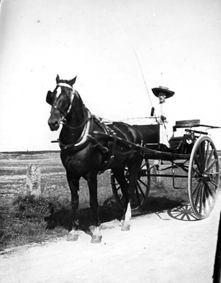Häst och kvinna på väg