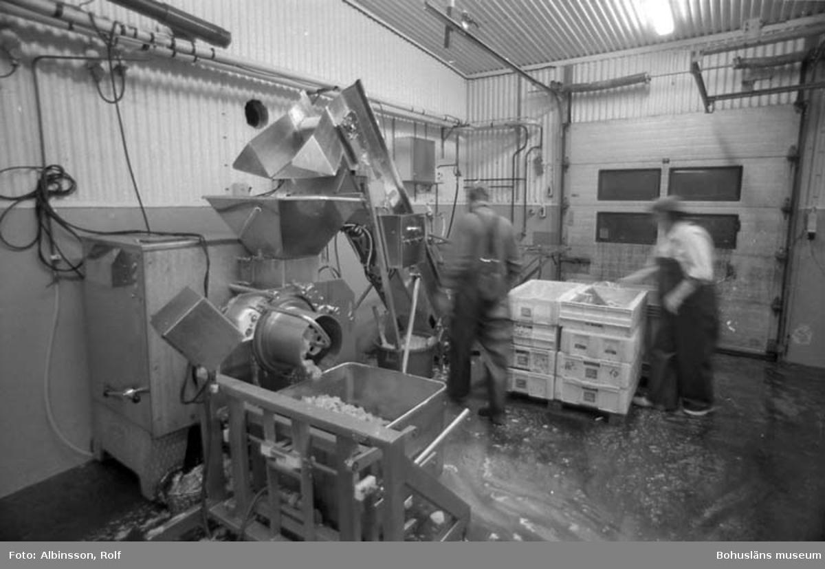 """Enligt fotografens noteringar: """"Helbild på skinn- och benseparatorn och malningen.  Erik Jonsson och Doris Wahlgren."""" Fototid: 1995 den 16, 24 november och 11 december."""
