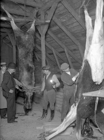 """Text till bilden:""""På logen hänger älgar som håller på att styckas. Grinneröd""""."""