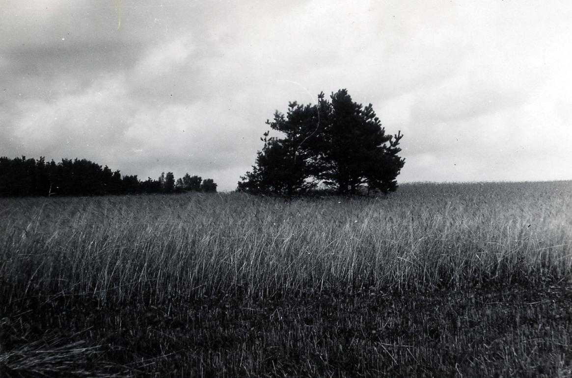 Halland, Veinge sn. Jordblandat röse (borttaget). Fornlämning nr 34. Foto Victor Ewald aug 1928.