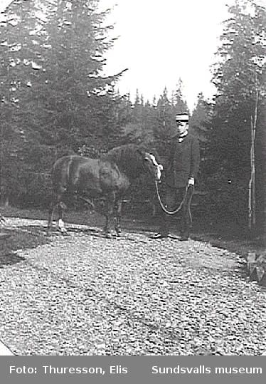 Elis Thuresson med sin ponny, Thurebo, Petersvik.