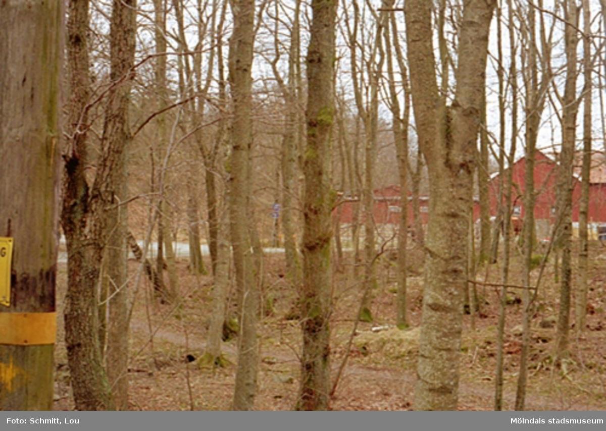 Skog med ekonomibyggnad i bakgrunden. Fastigheten tillhör Gunnebo slott.