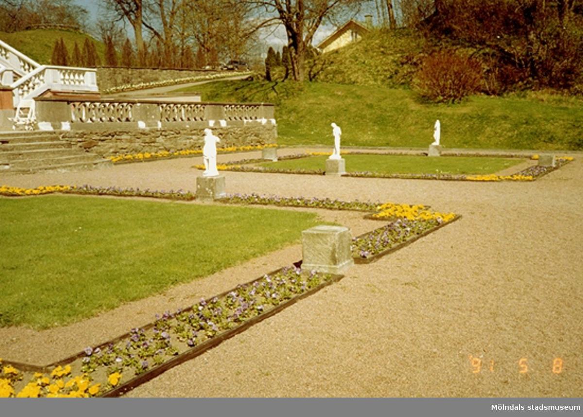 En del av Gunnebo slottsträdgård med blomsterrabatter runt två gräsmattor och tre statyer, som står på varsin sida om gräsmattorna. Maj 1991.