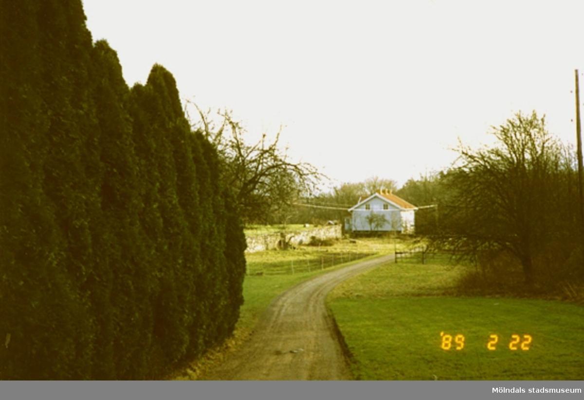 Till vänster ses thujor/cypresser vid en grusväg som leder till ett bostadshus.
