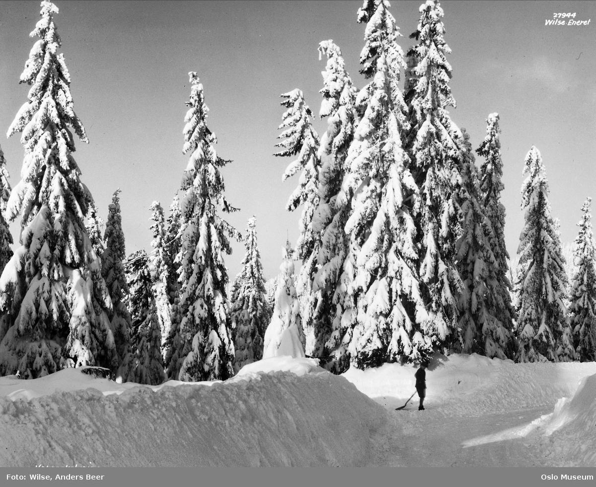 skog, grantrær, snø, vei, brøytekanter, mann, snømåking