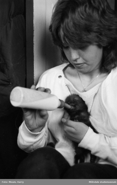 """Rävungar hos familjen Ovring i Hassungared, Lindome, år 1984. """"Ulrika har fått en ny gunstling och den ger hon gärna nappflaskan.""""  För mer information om bilden se under tilläggsinformation."""
