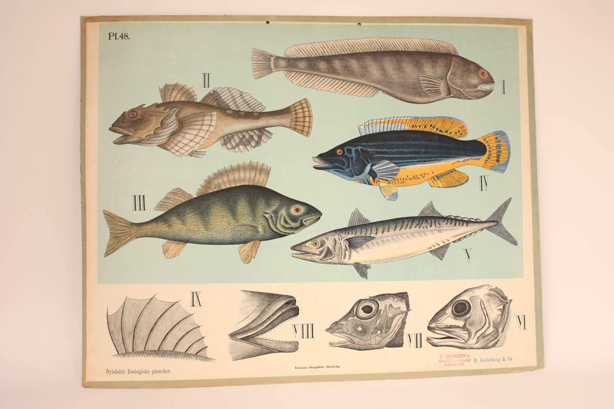 Papp-plansje med teikna og fargelagt, trykt motiv. Motivet er ulik saltvassfisk