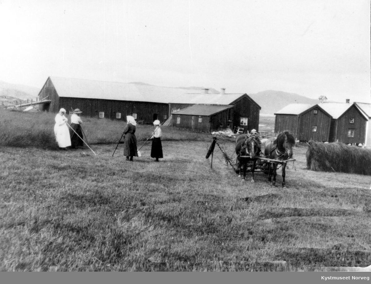 Flatanger, slåttonn på Løvøya