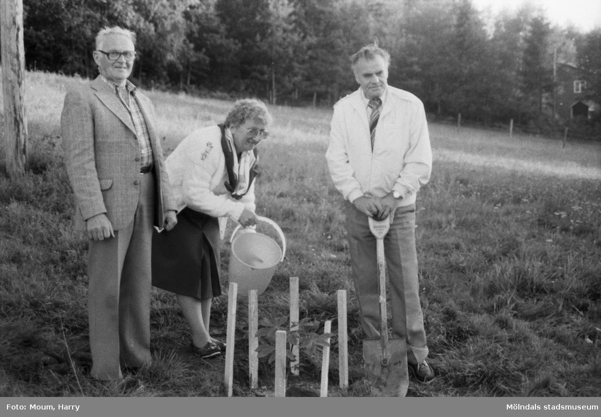 Kastanj planteras som vårdträd vid sommarens sista sommarkafé på Börjesgården i Hällesåker, år 1984.  För mer information om bilden se under tilläggsinformation.