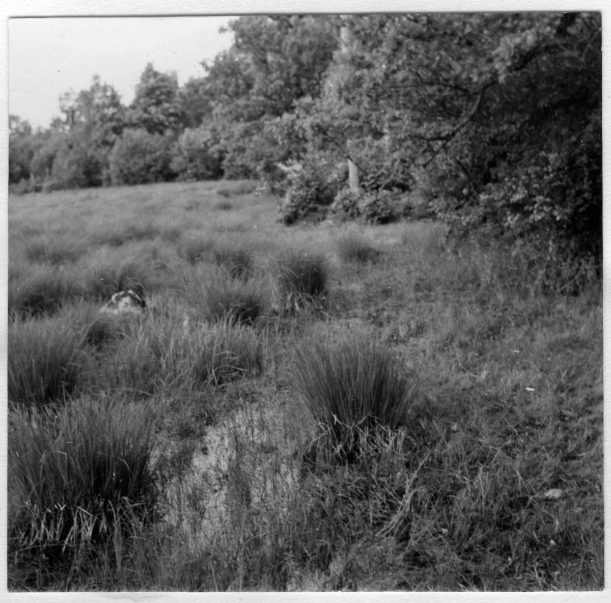 'Bildtext: ''Halltorp brunmossekärret.'' ::  :: Ingår i serie med fotonr. 7037:1-15 med biotopfoton hörande till Fil. dr. Samuel O. Larssons skalbaggssamling från bl.a. Öland och Bohuslän (donerad 1974).'