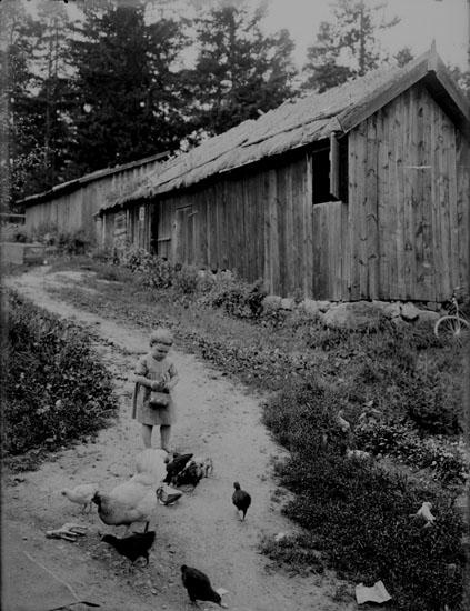 Hönsutfordring, en liten flicka.Träbyggnader.