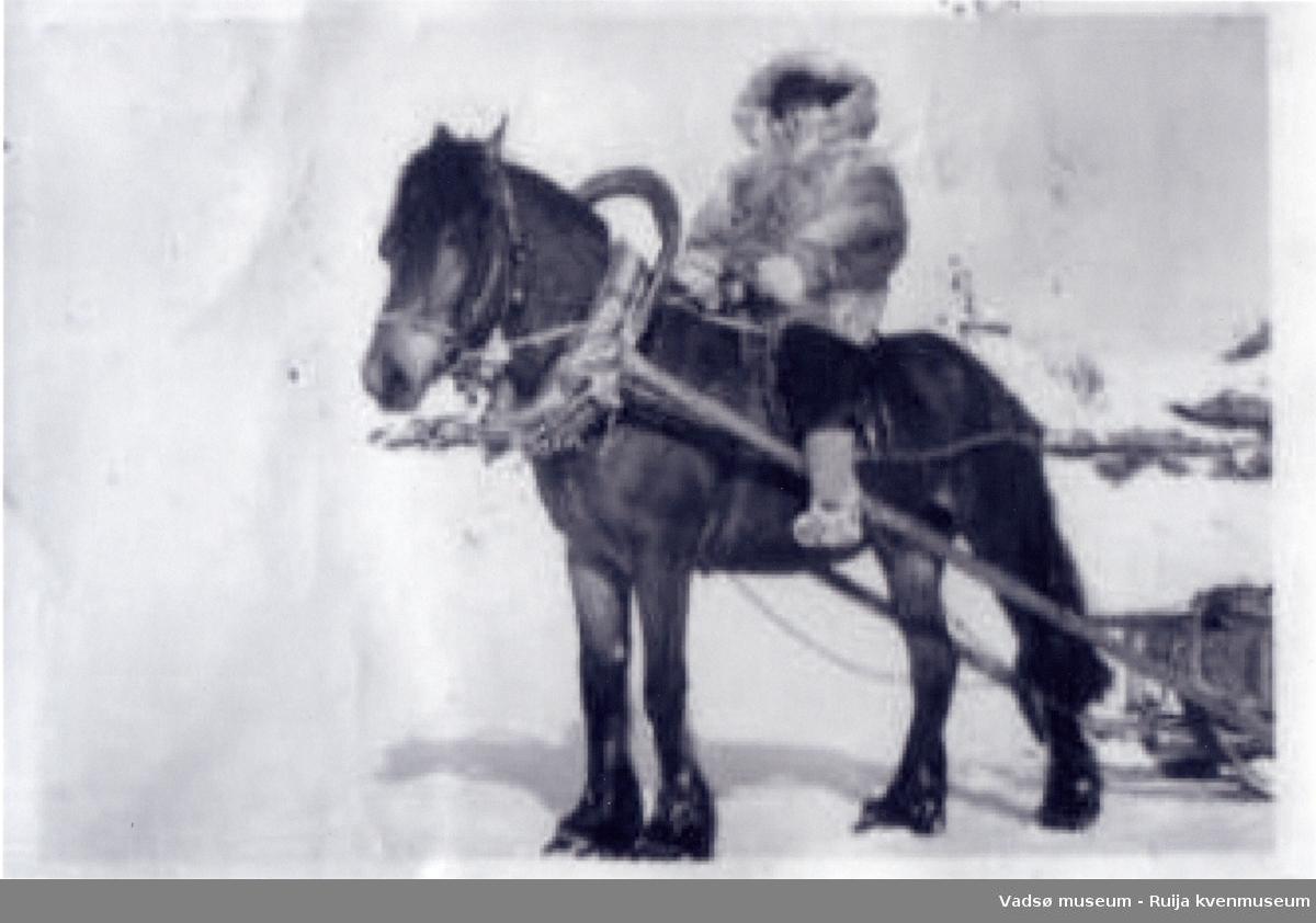 Dame kledd i pesk og russekatanker på en av Arnulf Bauna sine hester. Kan være Sigrun Ingilæ som kjørte for Kraftlaget på Vidda. Bildet er tatt i Komagvær på midten av 1950-tallet.