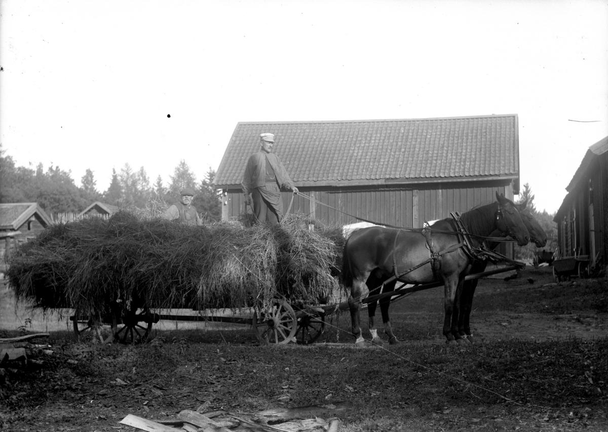 Hästar spända för vagn med hö, två män. Byggnader.