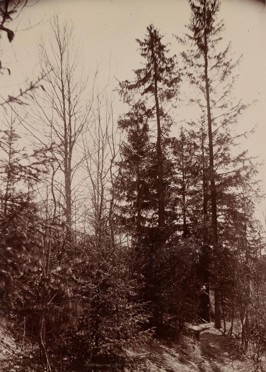 Julie Mathiesen går i skogen.