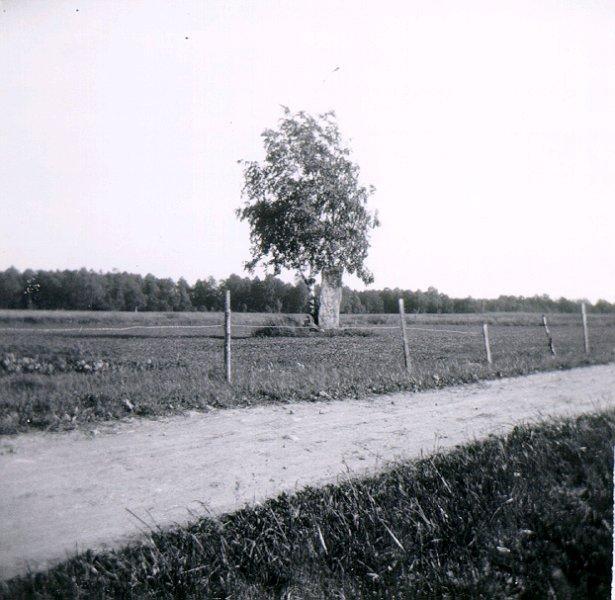 Runsten vid Gärdet, Skånum.
