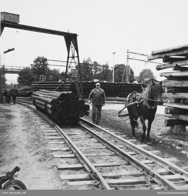 Stolpetransport med hest og traller på Telegrafverkets impregneringsanlegg på Lillestrøm