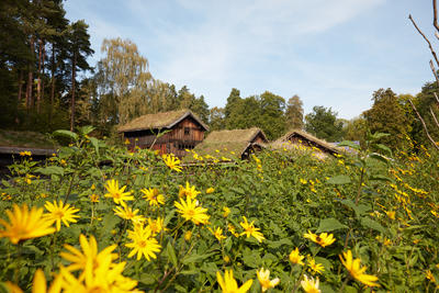 The Countrysider at Norsk Folkemuseum. Buildings. Trees, Flowers. Foto/Photo
