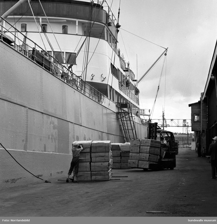 Bilder till ett reportage om exporten vid Östrands pappersfabrik. En båt lastas med massabalar, stuveriarbetare har matrast.