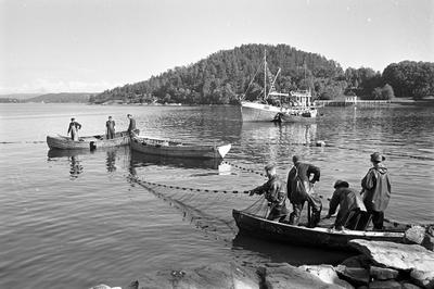 Fishermen aT Hvervenbukta near Oslo, 1961 (Foto/Photo)