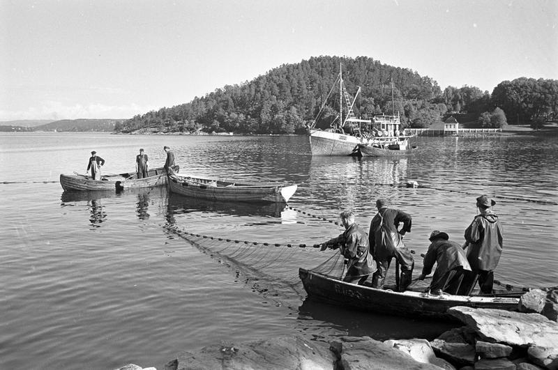 Brislingfiske i Hvervenbukta, Oslo.  1961. Foto/Photo
