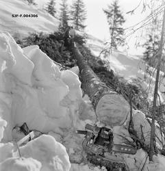 """""""Tømmerkjøring i Vestre Gausdal, Oppland. Kristofer Kronberg"""