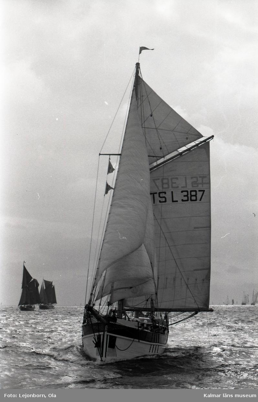 The Tall Ships' Races är en internationell havskappsegling för segelfartyg och stora segelbåtar som har arrangerats sedan 1956. Kappseglingen arrangeras av Sail Training International.  I tävlingen deltar skolfartyg, scoutbåtar och privata skutor och båtar från många olika länder; tävlingen i sig är inte det viktiga utan ungdomsarbetet. Ett av prisen är för gott kamratskap. Förutsättning för att få delta i seglingen är att minst 50 % av besättningen består av ungdomar mellan 15 och 25 år. Nederländska briggen Mercedes i Antwerpen under tävlingarna 2006  Villkoret för att få deltaga är att fartyget är över 30 fot i vattenlinjen och att minst halva besättningen består av s k trainees i åldern 16 till 25 år.  Klassindelningen är: A-klass, över 160 fot (48,8 m) B-klass, 160 - 100 fot (48,8 - 30,5 m) C-klass, 100 - 30 fot (30,5 - 9,14 m)   Mellan 1973 och 2003 var tävlingens officiella namn The Cutty Sark Tall Ships' Races, då huvudsponsorn var Cutty Sark whisky. Från år 2004 var huvudsponsorn Antwerpen (hamnen, staden och provinsen), och 2010-2014 är Szczecin huvudsponsor.  1988 hölls Tall Ships´ race i Karlskrona.  98 fartyg kom till Karlskrona i samband med starten av Cutty Sark Tall Ships' Race. Samtidigt besöktes Karlskrona av * Vega international drygt 100 fartyg * Kungliga Motorbåtsklubben drygt 15 stora motorbåtar * SM i brädsegling ca 200 deltagare