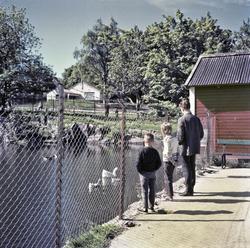Foto av en mann og to barn som ser på svanene i Vanndamman p
