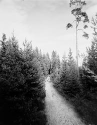 Tolvforsheden. Den blivande Skogskyrkogården som invigdes 19