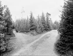 Tolvforsheden Den blivande Skogskyrkogården som invigdes 19