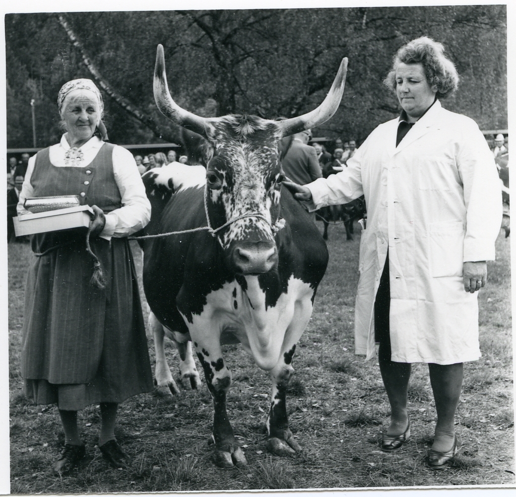 Borghild Glosimot med premiera ku.