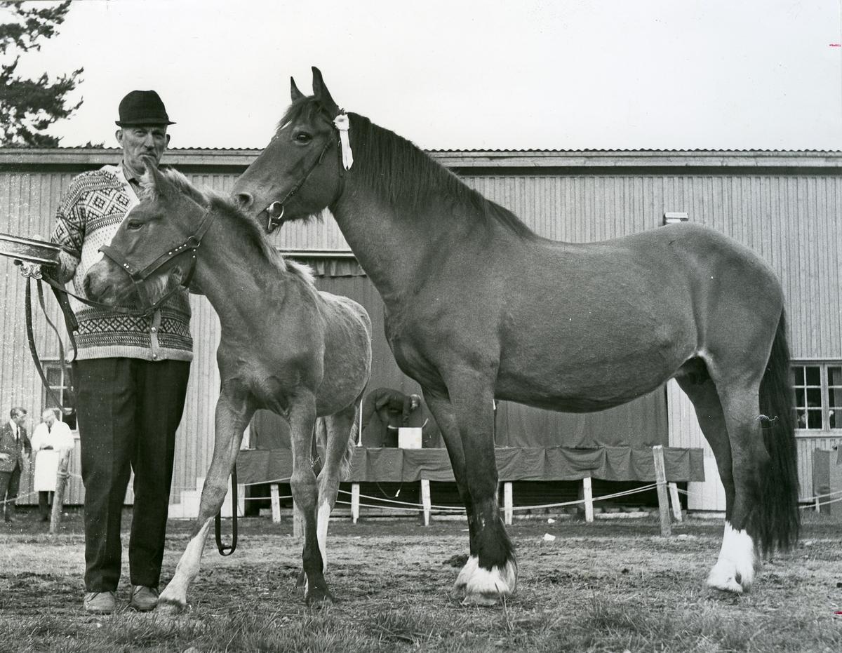Oskar Kittilsen med vinnaren av Seljordprisen i 1970, hesten Skjøslill.