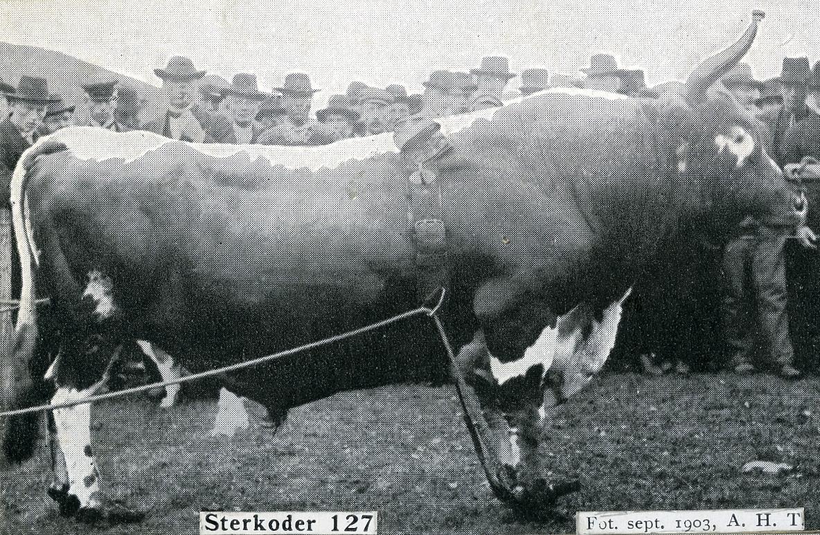 Avlsoksen Sterkoder 127.