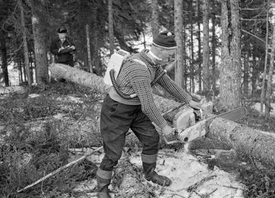 Måling av arbeidskapasiteten til skogsarbeidere