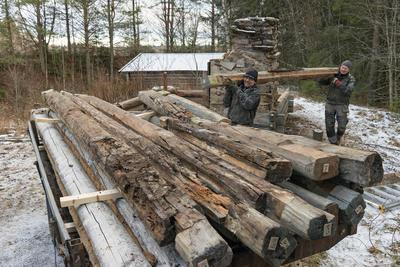 Arbeid med restaurering av laftet tømmerbu på Prestøya, Norsk skogmuseum. Kvannstranddamkoia. (Foto/Photo)
