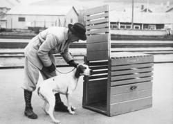 """Hundekasse med hund som skal inn - merket """"Elverum St."""""""