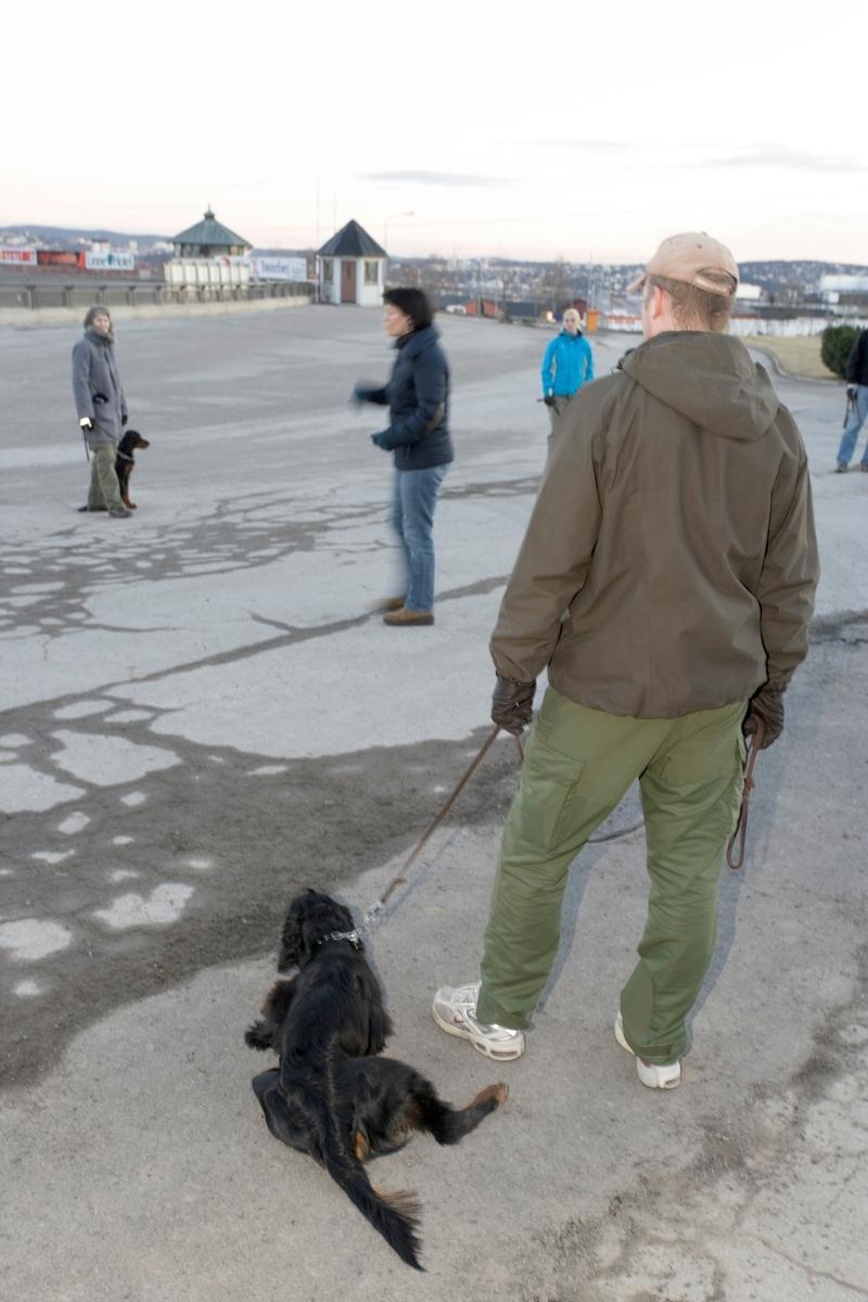 Dressurkurs for hund. Treningskveld for hunder og hundeeiere.