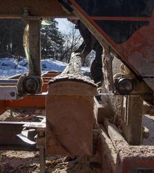 Bakhona skjæres av stokken. (Foto/Photo)