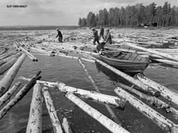 Fløtere i arbeid med tømmerbom ved Osmundsand i Nordre Osen,