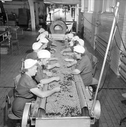 Interiör av Sirius konservfabrik vid Nykvarn. Fabrikschef va