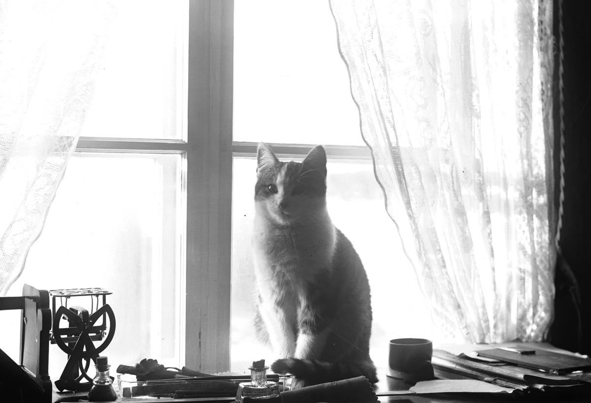 """""""Erik-Lars"""". Katten i fönstret"""
