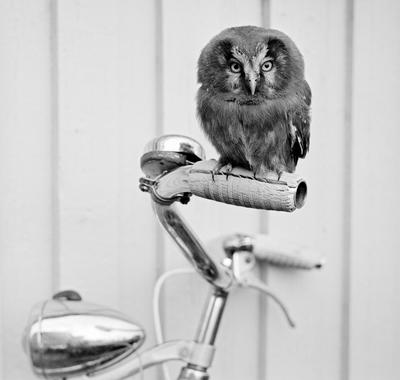 Perleugle på sykkelstyret.