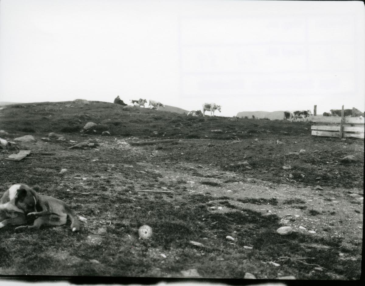 Setervoll, Hellebekk, Sør-Aurdal.
