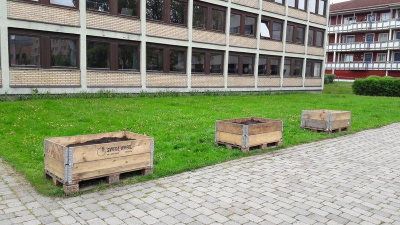Nå venter vi spent på at frøene skal spire. Sagelva barnehages plantekasser foran museet. Foto: MiA
