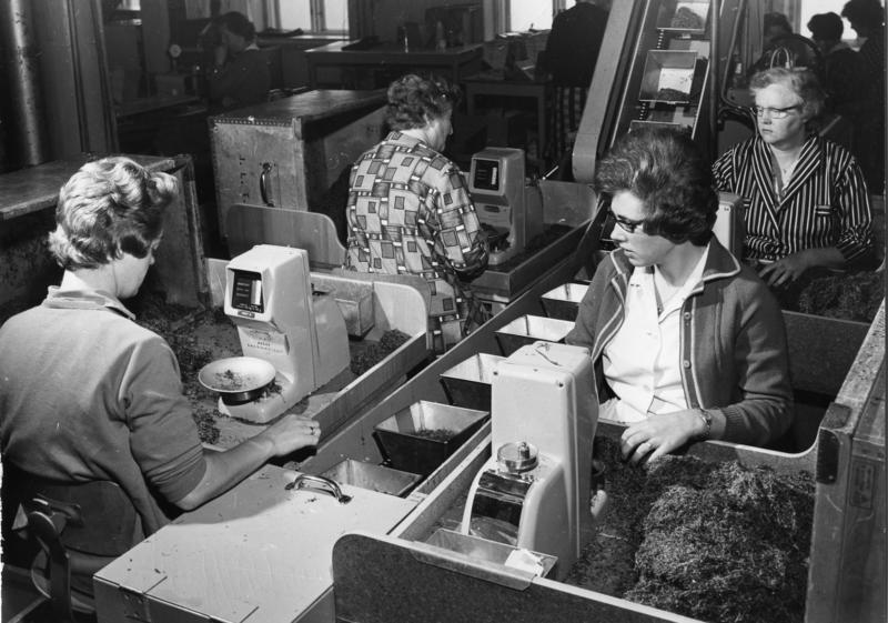 Tobakksproduksjon i Tiedemanns fabrikk i Stensberggata, Oslo, 1964.