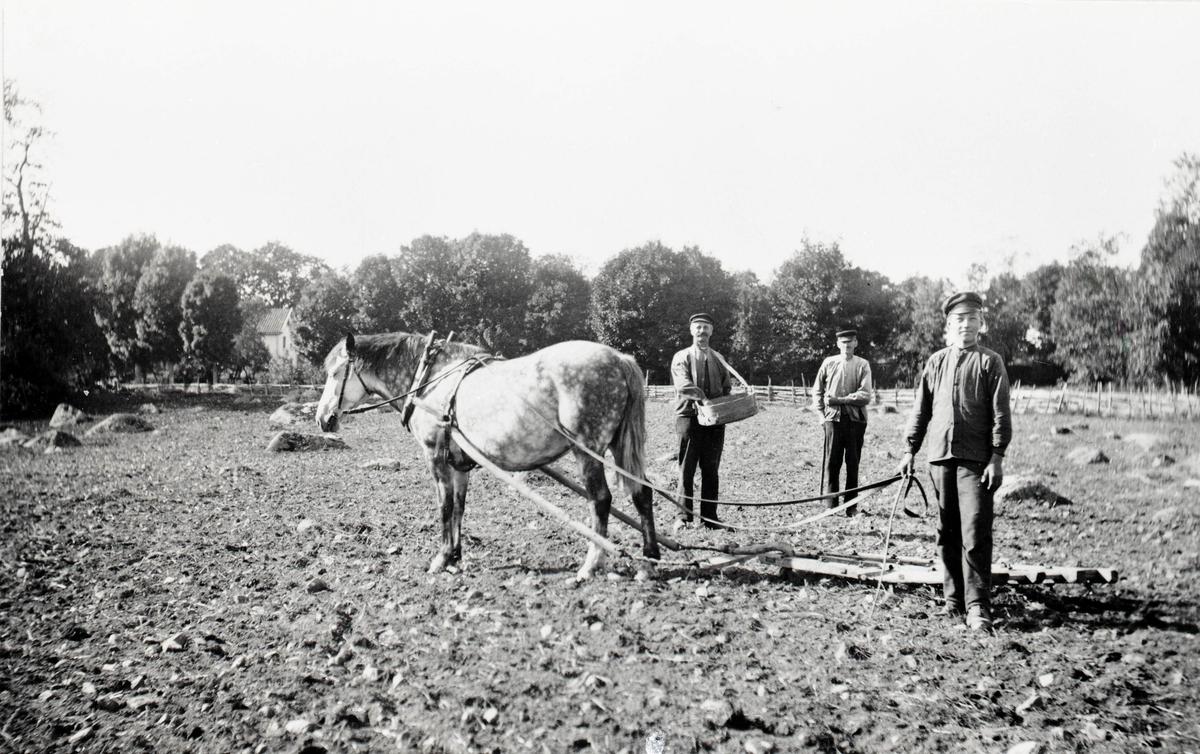 Lantbrukarna bröderna Karl och Viktor Johansson håller på med höstsådden.