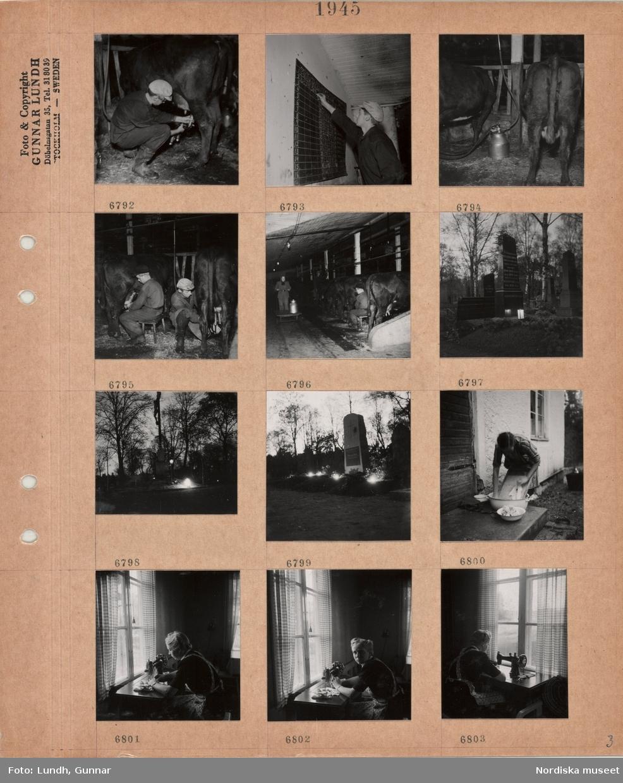 Motiv: Interiör ladugård, en man monterar mjölkmaskin på ett kojuver, en man noterar siffror på en tavla, kor maskinmjölkas, en ko mjölkas för hand, en ko maskinmjölkas av män, kvinna kör en vagn med mjölkkärl, kor på rad, gravstenar på kyrkogård, tända lyktor och ljus, en kvinna står och tvättar på en trappa utomhus, en kvinna syr på symaskin vid ett fönster.
