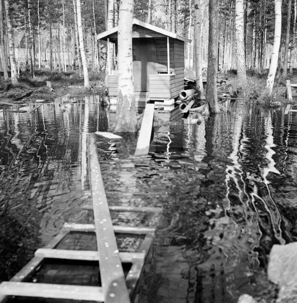 Granberg, Lortgrop på Dalavägen, 5 Maj 1967