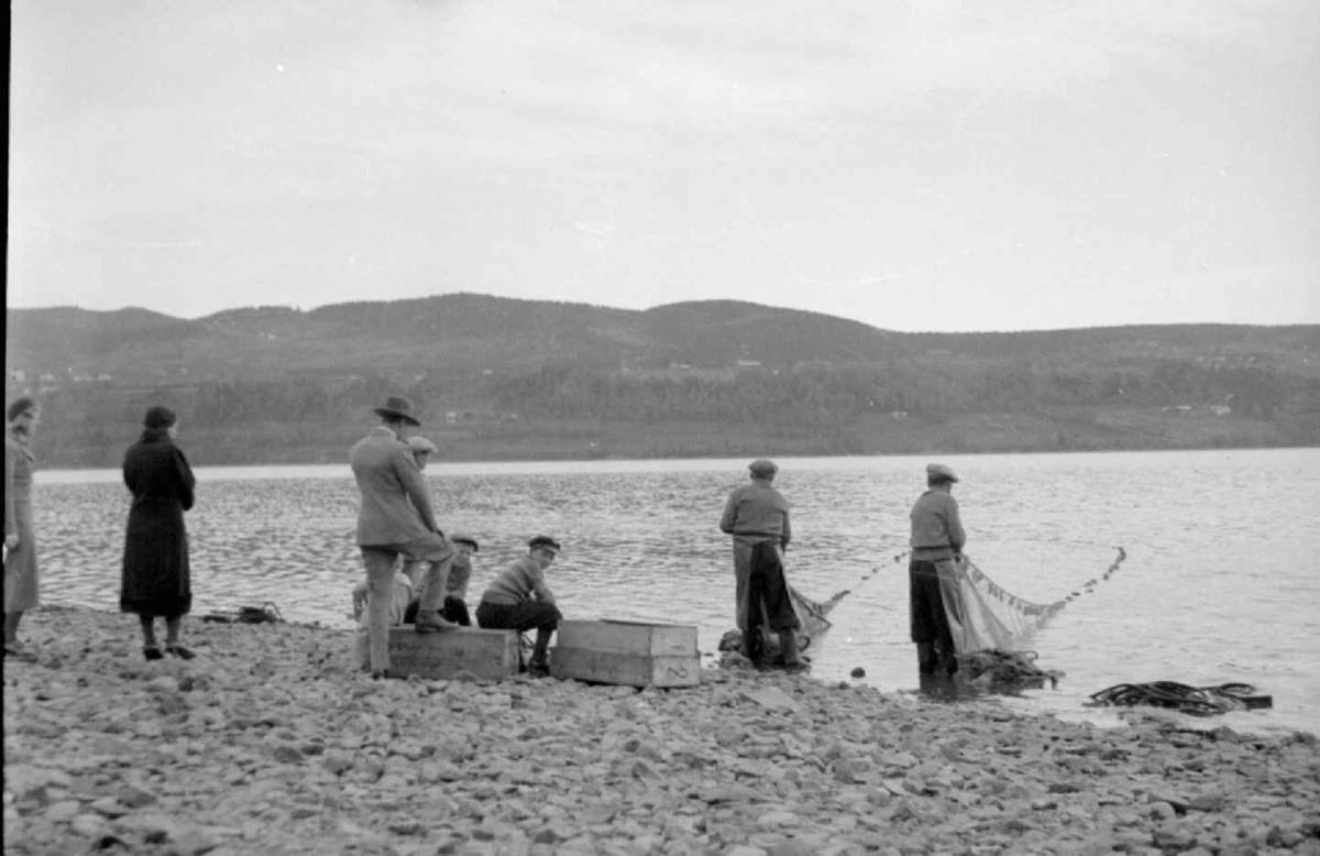 Lågåsildfisket i Øyresvika.