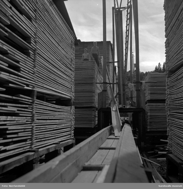 En stor serie bilder från verksamheten vid brädgården på Skönviks sågverk.
